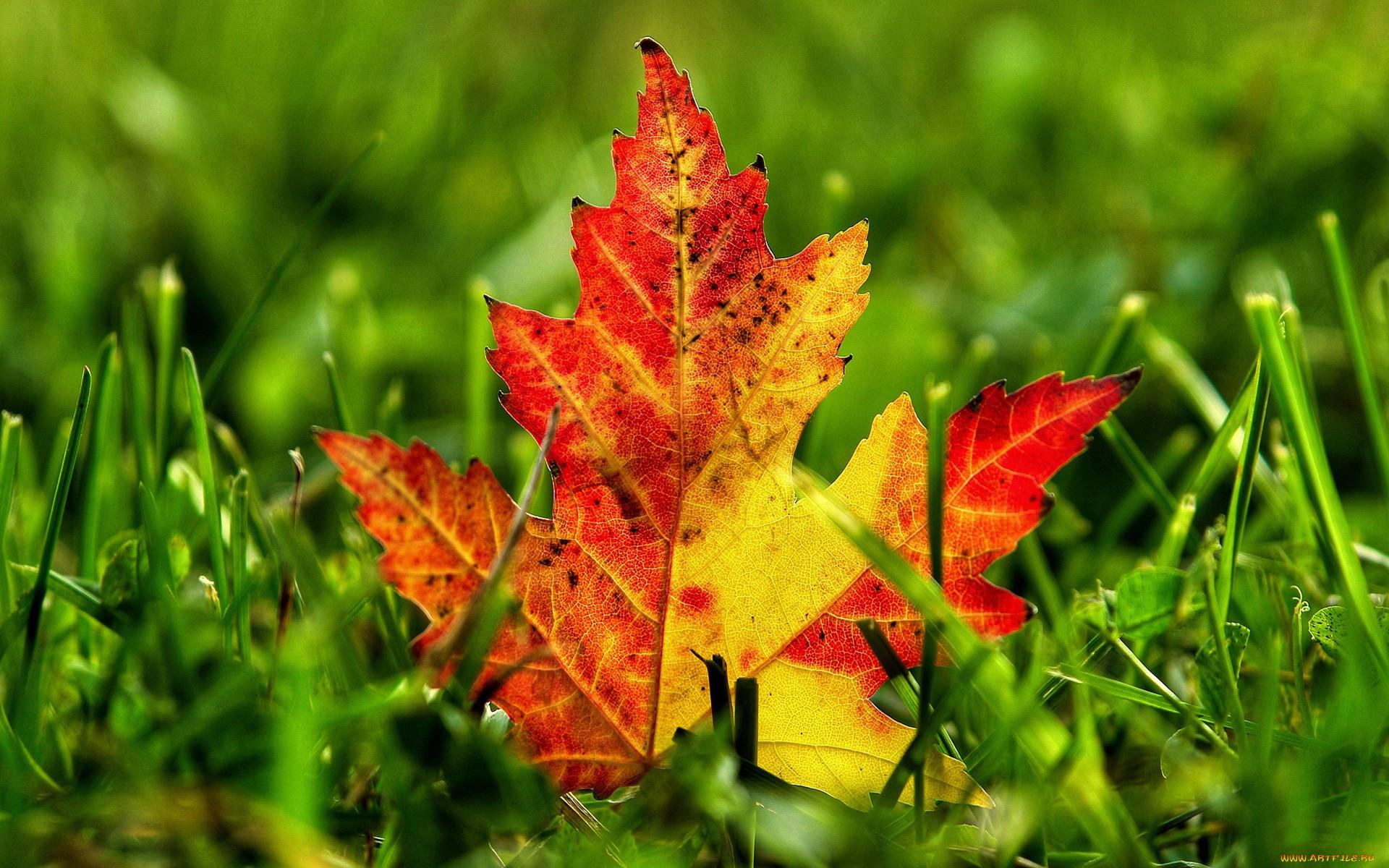 Картинки природа осени листья